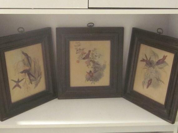 Vintage 1940's Gould Hummingbird Prints Qty of 3 Framed