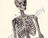 Skeleton Man Human Anatomy Chart Skeletal System Medical Illustration To Frame 1920s