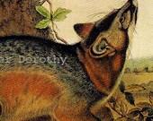 Grey Fox John J Audubon Vintage Wild Animal Natural History Lithograph To Frame
