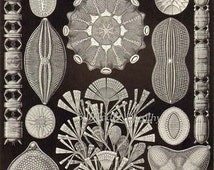 Diatom & Lichen Formations Haeckel Microbiology Print Natural History Oceanography Victorian Scientific Lithograph