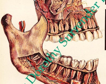 Human Anatomy Tooth Disease Creepy Tooth Fairy 1908 Medical Dental Illustration