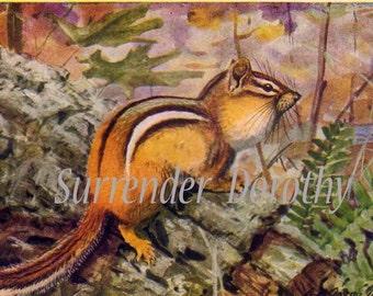 Chipmunks Louis Agassiz Fuertes Vintage Print Natural History Lithograph Illustration To Frame