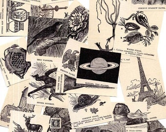 Vintage Clipart 1910 Antique Natural History Illustrations Vintage Engraving Snippets Assortment Packet Of 24