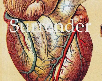 Human Anatomy Heart Liver Stomach Lung Vintage Medical Lithograph Chart 1908 Original