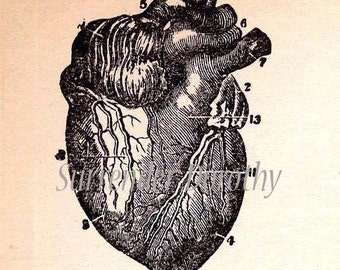 Human Heart Human Anatomy Chart Engraving Five Views 1908 Original