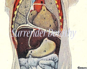 Human Anatomy Chest Abdomen Anterior Posterior Vintage Medical Chart Front And Rear Views 1920