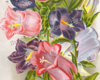 Canterbury Bell Flowers 1922 Jazz Age Botanical Lithograph Print For Framing