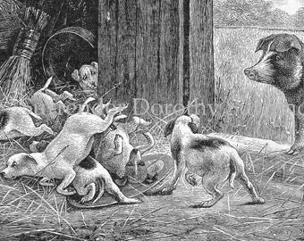 Pups & Pig Morning Call 1892 Victorian Farm Animals Natural History Illustration For Children