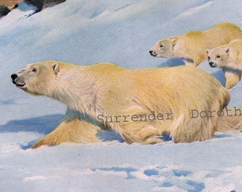 Polar Bear Mother Cubs 1911 Natural History Vintage Lithograph Illustration Germany Original Edwardian Era Art To Frame
