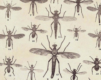 True Flies Entomology Natural History 1907 Vintage Rotogravure Illustration Chart Of Pesky Insects To Frame XIX