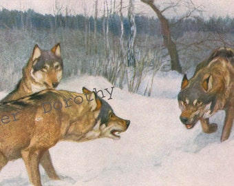 Wolf Pack New Dog In The Neighborhood Vintage Natural History Lithograph Print 1914 Illustration Germany