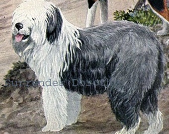 Old English Sheepdog & Collie Dogs Louis Agassiz Fuertes 1910s Original Edwardian Antique Lithograph To Frame