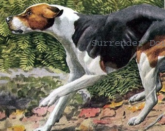 English & American Foxhound Dog Louis Agassiz Fuertes Vintage Original Edwardian Antique Lithograph To Frame