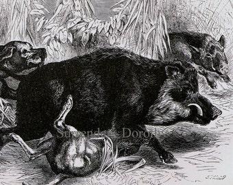 Wild Boar Hunt Vintage Victorian Print 1870s Black & White Natural History Engraving To Frame