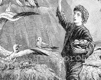 Shipwrecked Castaway Boy Gathers Bird Eggs 1890 Vintage Victorian Storybook Engraving For Children To Frame Black & White