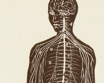 Nervous System Human Anatomy Anterior View Scientific Medical Chart To Frame 1920s
