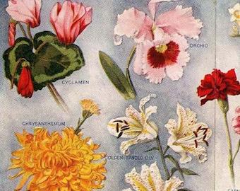 Exotic Brilliant Fragrant Flowers Edwardian Era 1912 Botanical Lithograph Illustration For Framing