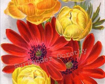 Anemone and Trollius Flowers Jazz Age Botanical Lithograph For Framing 1922