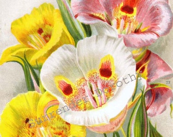 Mariposa Lily Flowers 1922 Jazz Age Botanical Lithograph Print For Framing