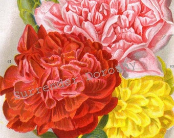Carnation Flowers Red Yellow Pink 1922 Jazz Age Botanical Lithograph To Frame