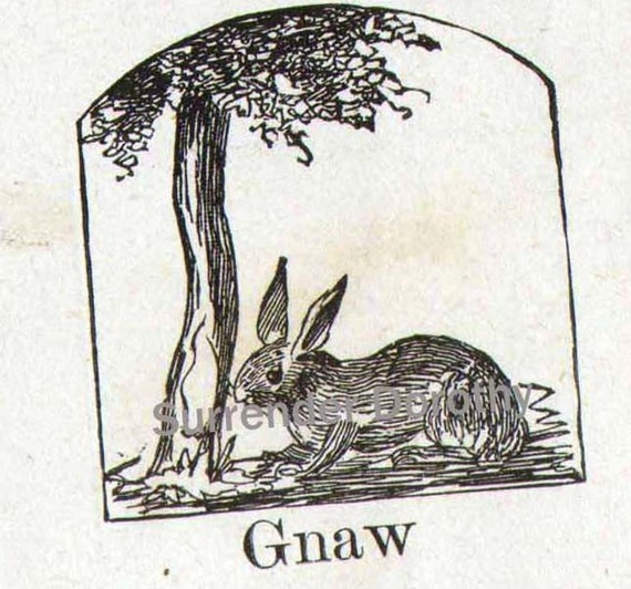 Gnawing Rabbit Mennonite Children's Pictoral Dictionary Victorian Era Engravings 1890 For Scrapbooking