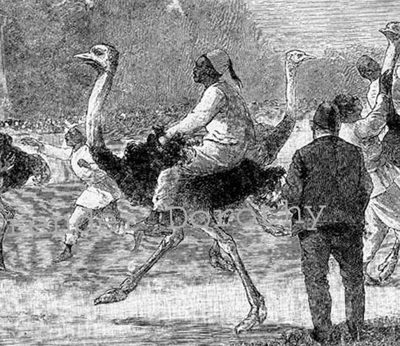 Ostrich Riders Of Africa Weird Victorian 1890 Natural History Engraving To Frame