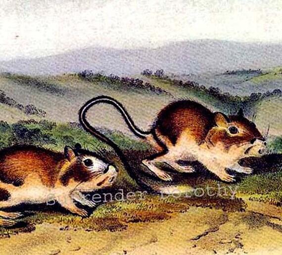 Pouched Jerboa Mouse John J Audubon Vintage Wild Animal Color Lithograph Natural History Print To Frame