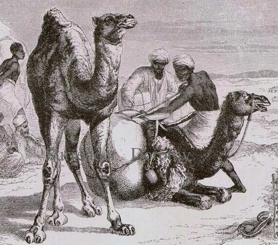Dromedary Camel Africa Victorian Era Vintage 1870s Black & White Natural History Wild Animal Engraving To Frame