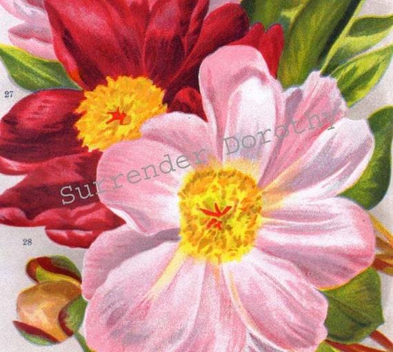 Single Peony Blossom 1922 Jazz Age Botanical Lithograph Flower Print For Framing