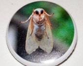 Moth Photo Button Pin Badge LET ME IN