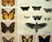 Australian Butterfly Cigarette Cards