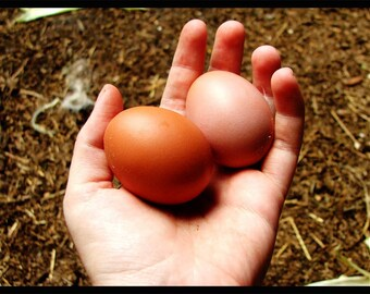 First Two Eggs