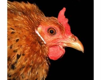 Buttercup Hen Print
