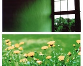 life is very long when you're lonely - set of two 8 x 12 film photographs - green urban landscape flowers