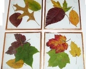 KIT - Glass Coaster Kit, COPPER, use with your pressed flowers, pictures, leaves and more - DIY Kit, Improved