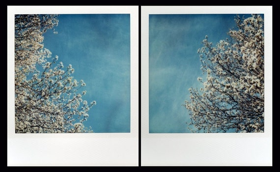 Polaroid Print 8x10 - Springtime Sakura Diptych - Fine Art Photography