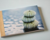 Sea Urchins Journal Reserved for Myapea