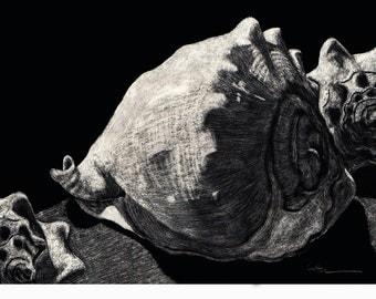 Seashells Reproduction of Scratchboard by Diane Cutter / black 8x10 mat / SFA