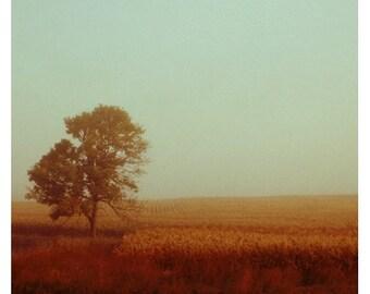 Homecoming - Autumn Decorating - Landscape Photograph - Fall Tree Photograph - Nature Photography - Autumn Art - Michigan Art - Fall Print