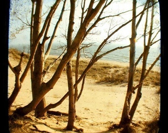 Nature Photograph - Landscape -  Sing a Song of Secret Places - Beach - Michigan - TTV - Viewfinder  - Fine Art Photography