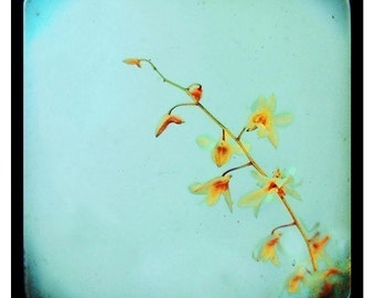Flower Photography - Orchid Photograph - Floral Photography - Baby Blue -Original Fine Art Photograph - Yellow - TTV - Through Viewfinder