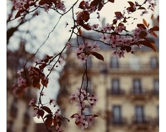 Paris in the Springtime - Paris Photograph - French Photography - The Arrival - Original Fine Art Photograph - Flower Photograph - Bock