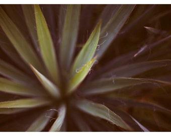 Art Photograph - Floral Photography - Nature Photograph - Fine Art Photograph - Yucca 1 - Green - Art - Still Life - Alicia - Garden Art