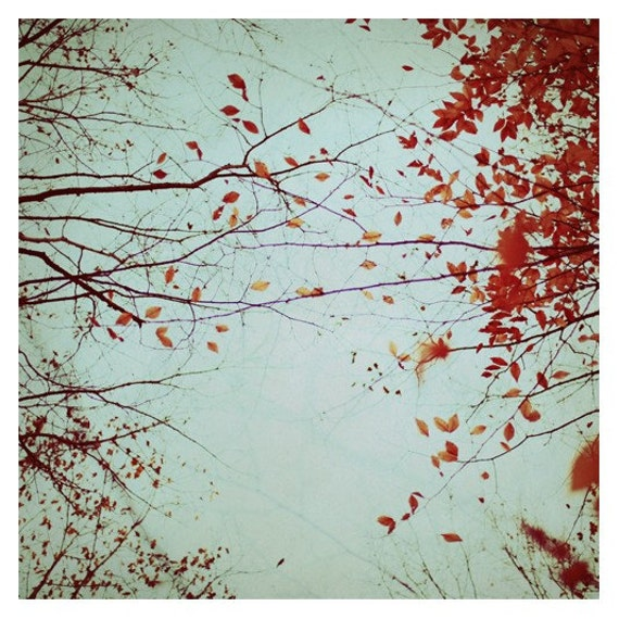 Autumn's Reach- Signed Fine Art Photograph