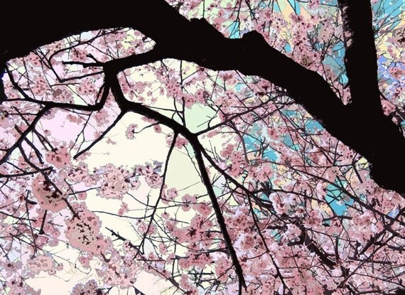 Cherry Bloosom Day- Original Signed Fine Art Photograph