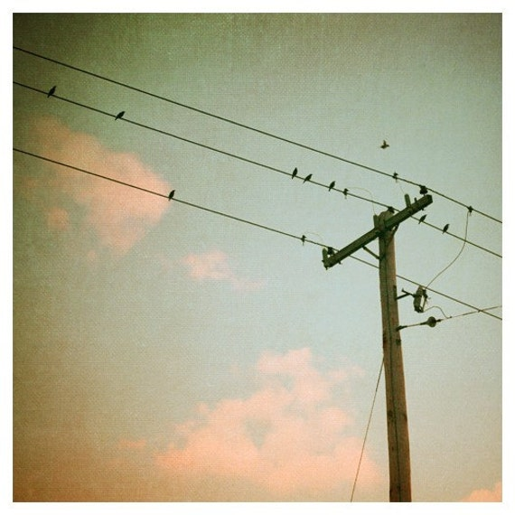 Nature Photography - Bird Photograph - Birds on Wire - Spring - Cloud Photograph - Cotton Candy- Original Fine Art Photograph
