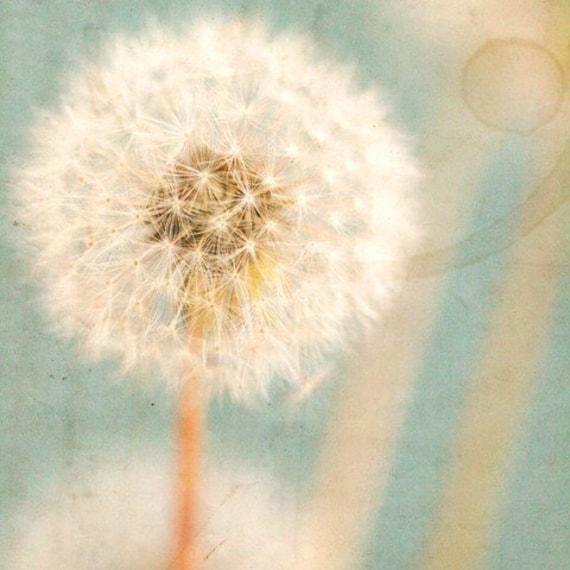 Januarys Daydreams- Original Signed Fine Art Photograph