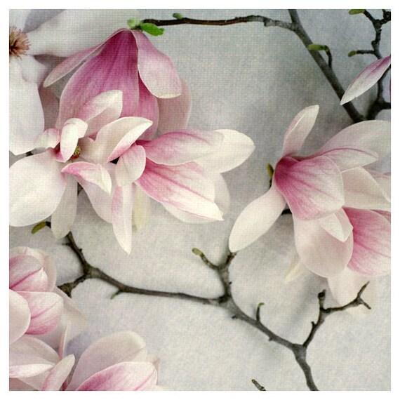 Flower Photograph - Nature Photography - Poem - Fine Art Photograph - Spring Magnolia Tree - Blossom - Bloom - Magnolia Blossom - Alicia