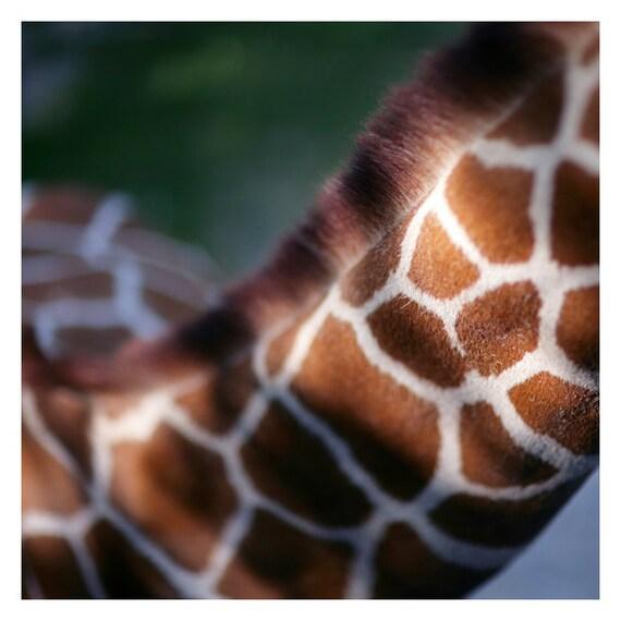 Nature Photograph - Giraffe Photograph - Print and Pattern 1 - Fine Art Photograph - Animal Art - Animal Print - Home Decor - Wall Art