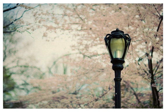 New York City Photograph - NYC - Central Park In Bloom - Original Fine Art Photograph of New York City - Central Park Art - Oversized Art